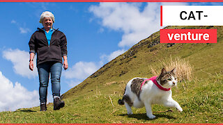The adorable cat which loves going HILLWALKING with her owner