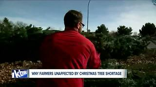 Why you could get a better deal on locally-grown Christmas trees this year - Video