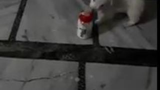 very Cute dog Feeding milk with fidder and help of small child  - Video