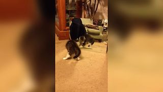 Cute Kitten Fights With Her Reflection - Video