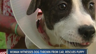 Woman saves dog after it was thrown from moving van - Video