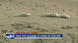 Dead fish wash up on the shores of Lake Erie; a case experts haven't seen in more than a decade - Video