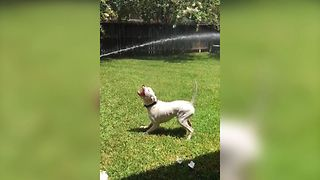 Water Loving Dog Falls In The Trash - Video