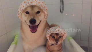 Cat and dog buddies take a bubble bath together - Video