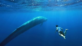 Blue Whales Nursing Off the Coast of Sri Lanka - Video