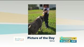 Thursday's Picture of the Day - Video