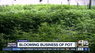 Encanto dispensary research centering on making medical marijuana more inexpensive - Video
