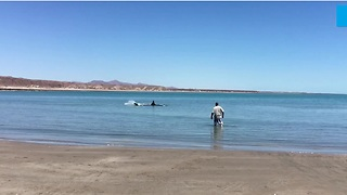 Man Notices Shark In The Shallows, Goes In For A Closer Look - Video