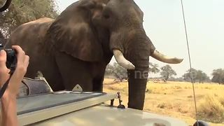 Elephant joins tourists on safari for a tea time break - Video