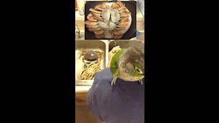 Cleaning crabs with parrots supervising
