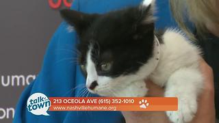 Nashville Humane Association Pet of the Week 6-9-17 - Video
