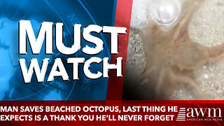 Man Saves Beached Octopus, Last Thing He Expects Is A Thank You He'll Never Forget - Video