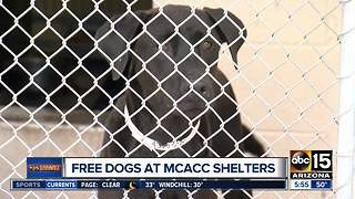 Free dogs up for adoption at MCACC - Video