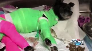 Dog dies after being set on fire earlier this month - Video
