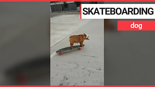 Talented dog teaches herself how to skateboard