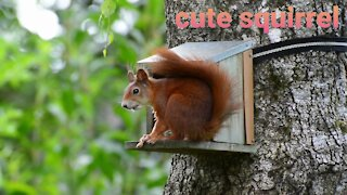 Cute and Funny squirrels