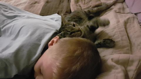 Kitten preciously bonds with little boy