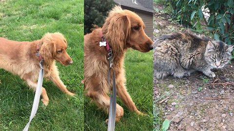 """Dog's Hilarious Reaction To """"Enemy"""" In Yard Has Owner Cracking Up"""