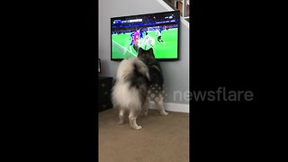 Dog tries to catch the football during a game of soccer on the TV