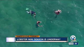 Lobster mini season underway in Florida - Video