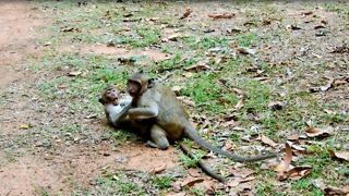 Baby Monkey Sweetpea Stop Border Mom Come Play With Friends