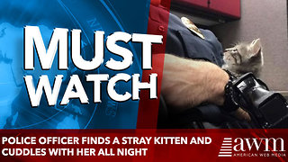 Police Officer Finds a Stray Kitten and Cuddles With Her All Night - Video