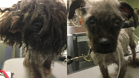 Makeovers For New York's Stray Dogs