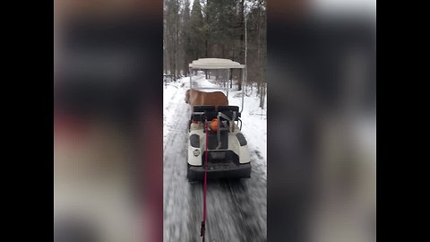 Dog goes for a Spin on Golf Cart