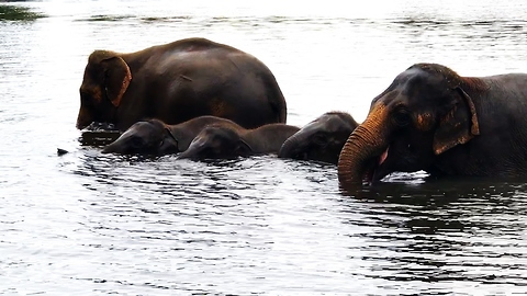 Baby elephants overjoyed to play in river