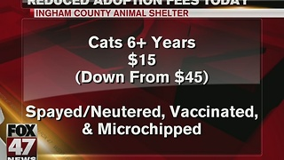 Cat adoption fees reduced at Ingham County Animal Shelter - Video