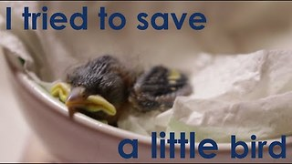 Guy Rescues Baby Bird That the Cat Dragged In - Video
