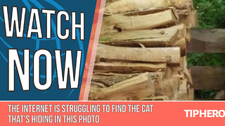 The Internet Is Struggling To Find The Cat That's Hiding In This Photo