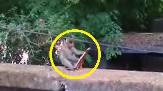 Monkey with Mirror..🐒 - Video