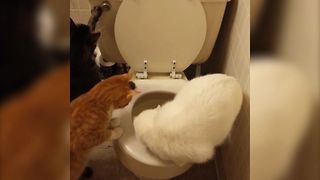 Curious Cats Learn How To Flush