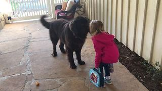 Little girl kisses dog goodbye before school - Video