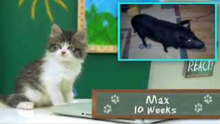 Cats React to Viral Videos - Purina Friskies commercial