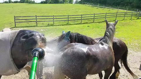 Silly Horse Gets Cooled Off By Hose