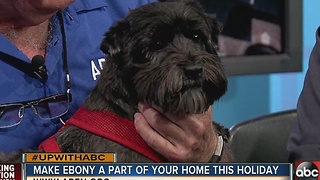 Say Hi to Ebony: 12/17 Rescues in Action superstar