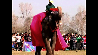 Elephant Beauty Pageant - Video