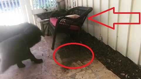 Clever dog knows to cover his tracks