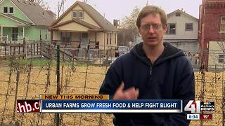 Man brings urban farm to KC neighborhood - Video