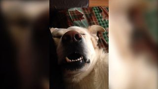 Cutest Snoozing Dog - Video