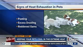 Tips for keeping yourself, pets safe during extreme heat - Video