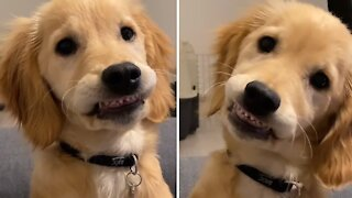 Sweet puppy adorably shows off his baby teeth