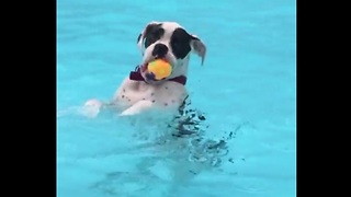 Dog hangs out in the pool just like a human - Video