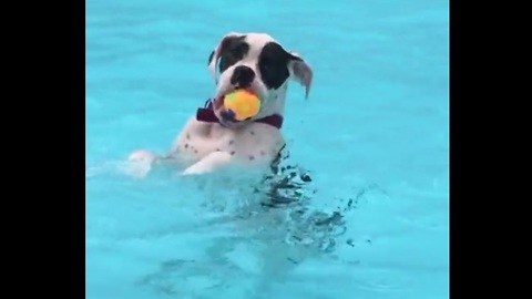 Dog hangs out in the pool just like a human