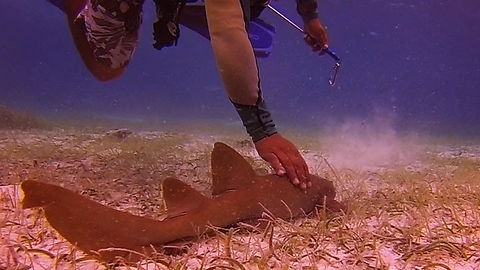 Baby Shark Follows Scuba Divers Like A Lost Puppy
