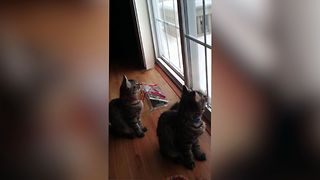 Cats Learn To Chirp Like Birds - Video