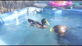 Boy Enjoys Playing With His Very Affectionate Pet Duck