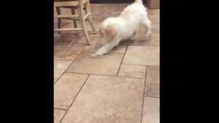 Puppy hilariously bewildered by ice cube - Video